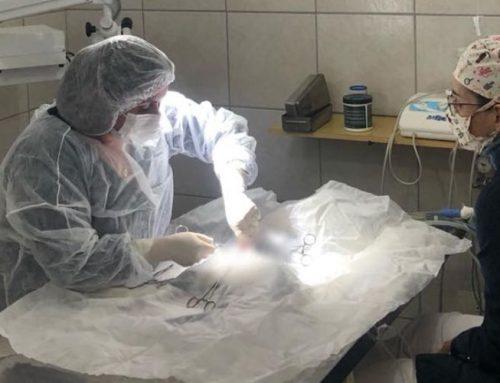 Como preparar seu cão para a cirurgia veterinária