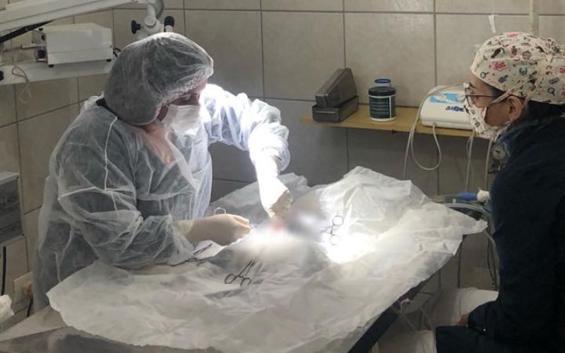 Cirurgia Veterinária em Santo André