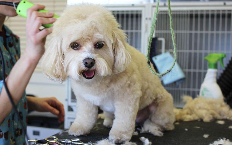 Posso usar shampoo comum no meu cachorro? 1