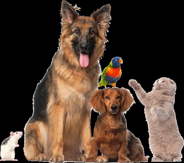 Atendimento para animais de estimação
