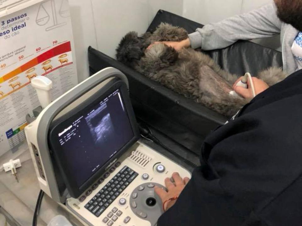 Exames Veterinários em Santo André