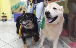 Banho e tosa em cachorros
