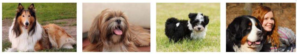 O que acontece com os pelos dos cães na Primavera? Entenda aqui 1