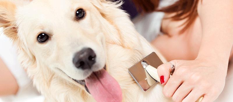 O que acontece com os pelos dos cães na Primavera? Entenda aqui 2