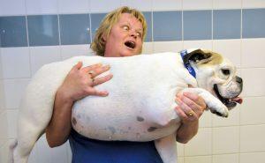 Obesidade em cachorros. O que fazer? 14
