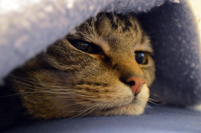 Câncer em cães e gatos: tratamento para a vida do seu pet 2