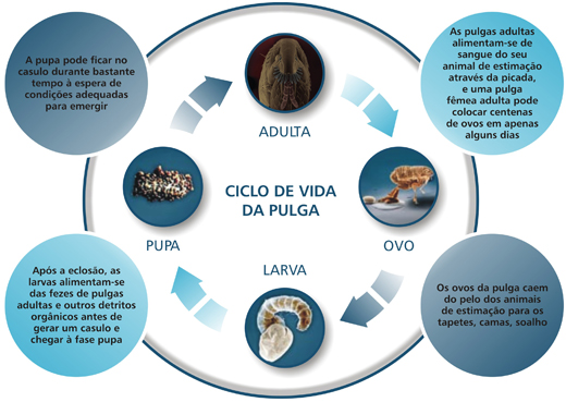 Ciclo de vida das pulgas