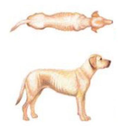 Cachorro muito magro