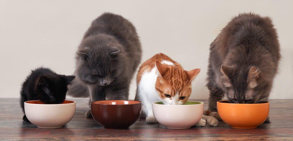 Alimentação gatos filhotes