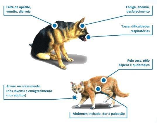 Sintomas verminose em animais