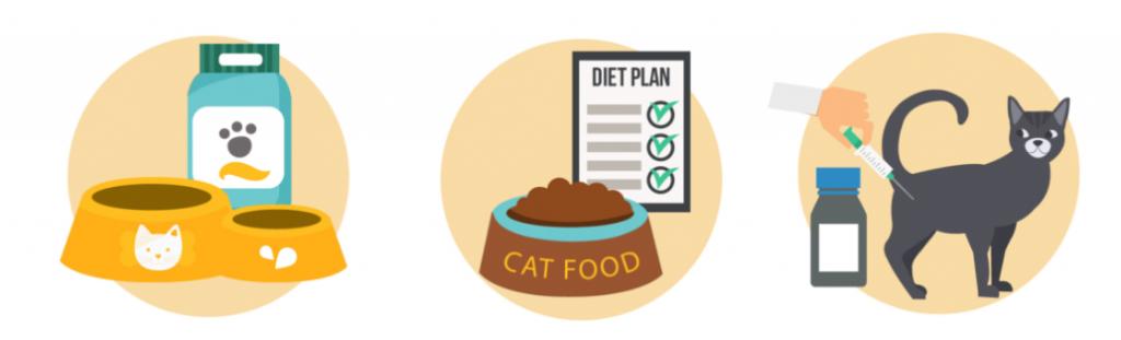 A cura da diabetes em gatos
