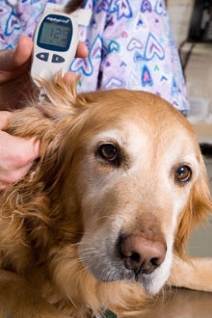 Medir glicose cachorro