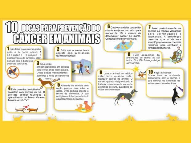 Alguns exemplos de atividades que promovem a saúde animal e colaboram para a prevenção do câncer.