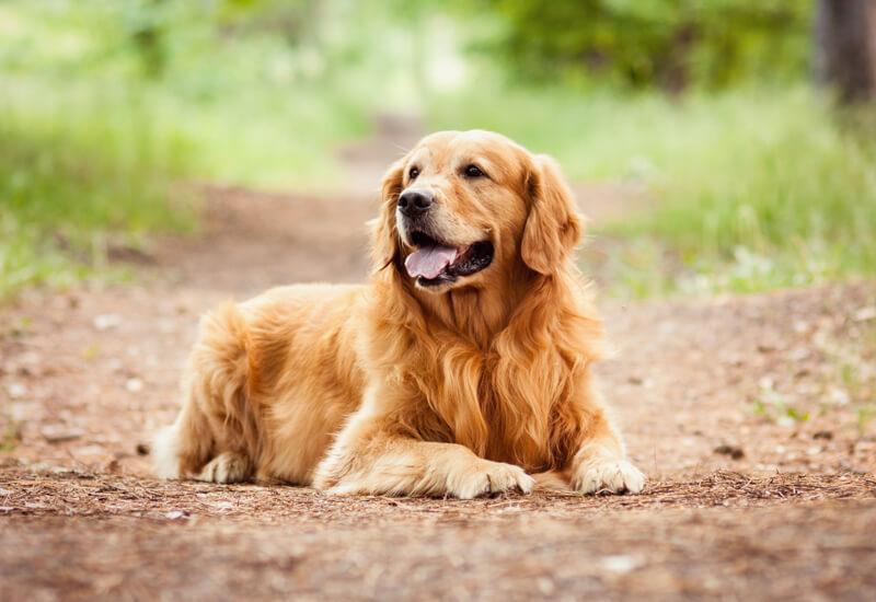 Tipos de pelos de cachorro e seus cuidados 6