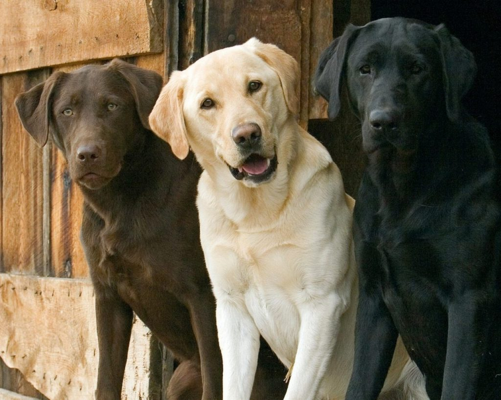 Artrite em cachorros - sintomas, tratamento e cuidados 4
