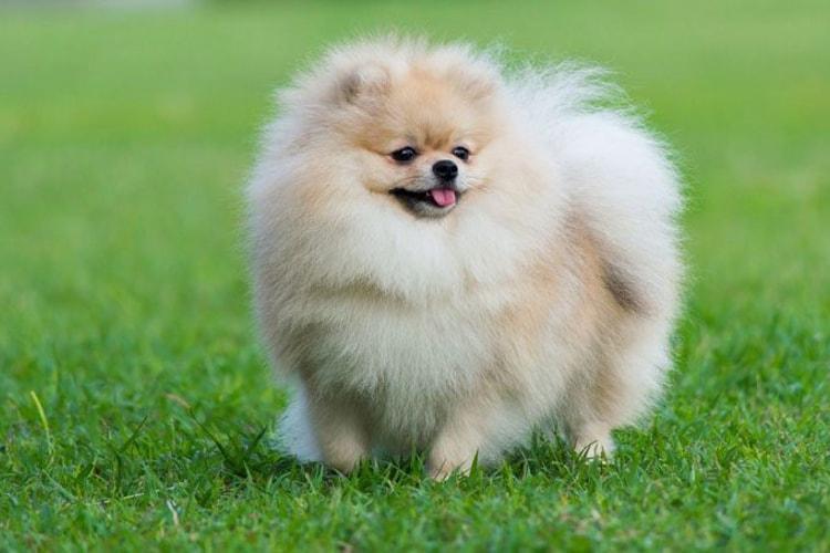 O que é a Diabetes Mellitus canina? 6