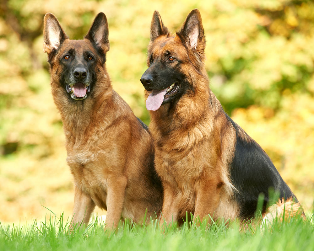 Tipos de pelos de cachorro e seus cuidados 17