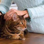 Sintomas, tratamento e remissão da Diabetes em Gatos 3
