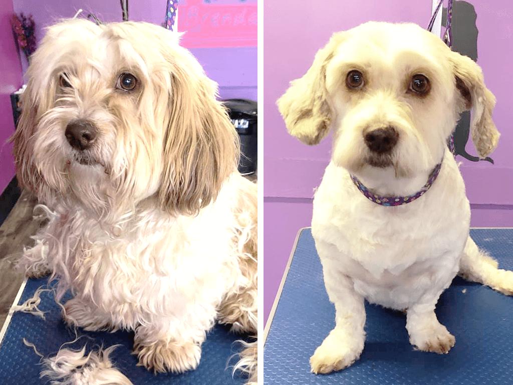 Posso usar shampoo comum no meu cachorro? 2