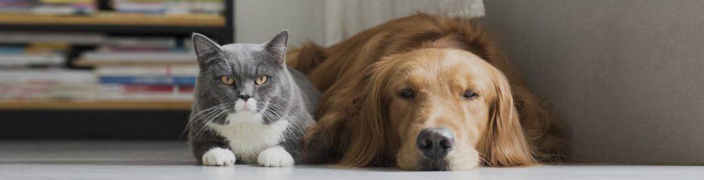 Castração de cachorro e gato em Santo André