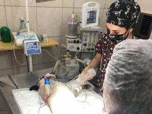 Cirurgia de castração em Santo André