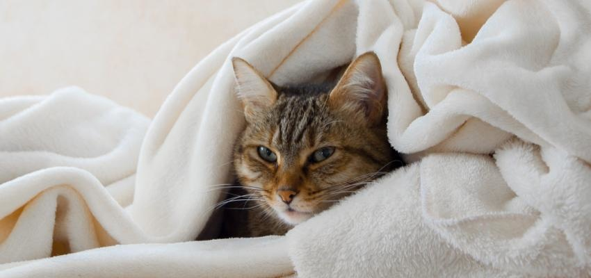 Por que meu gato está espirrando? 1