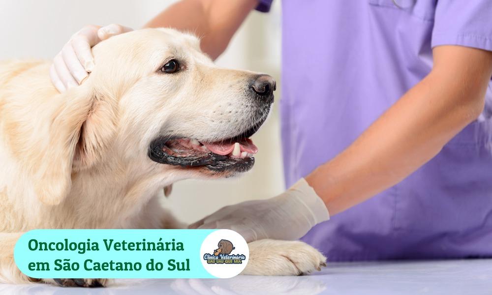 Oncologista Veterinário São Caetano do Sul