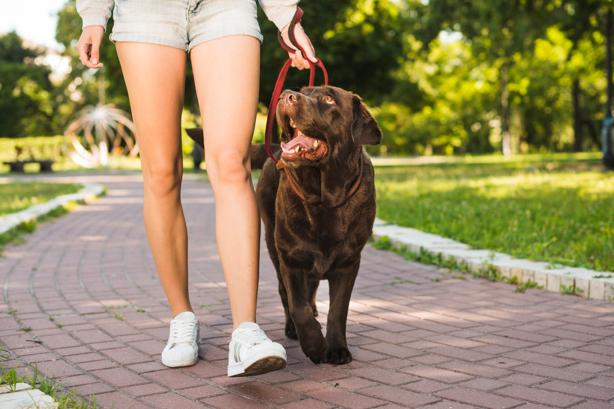 Sete dicas diárias para cuidar da saúde de seu cachorro 2