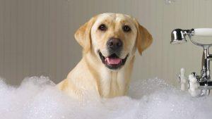 Posso usar shampoo comum no meu cachorro? 18