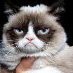 Seis coisas que você precisa saber sobre gatos idosos 8