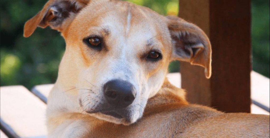 Saiba mais sobre vermífugos para cães e gatos 1