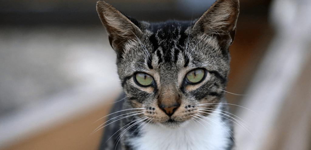 Saiba mais sobre vermífugos para cães e gatos 2