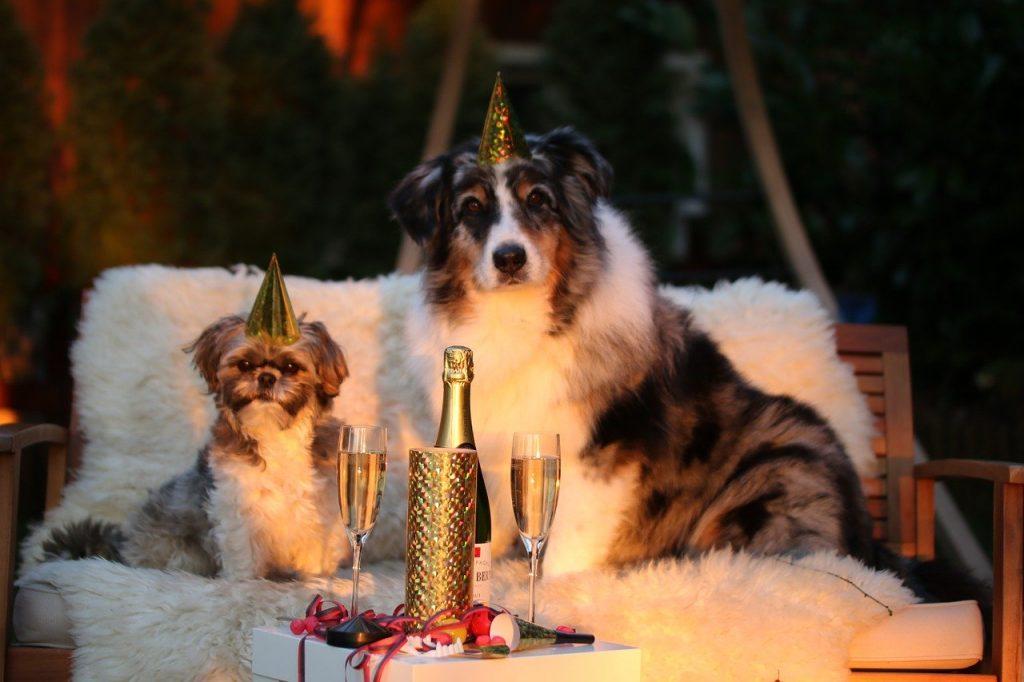 Cuidando do seu pet na ceia de Natal e Ano Novo 2