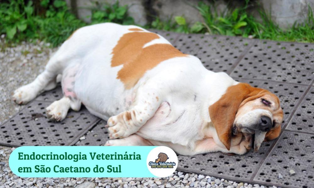 Endocrinologia Veterinário em São Caetano do Sul