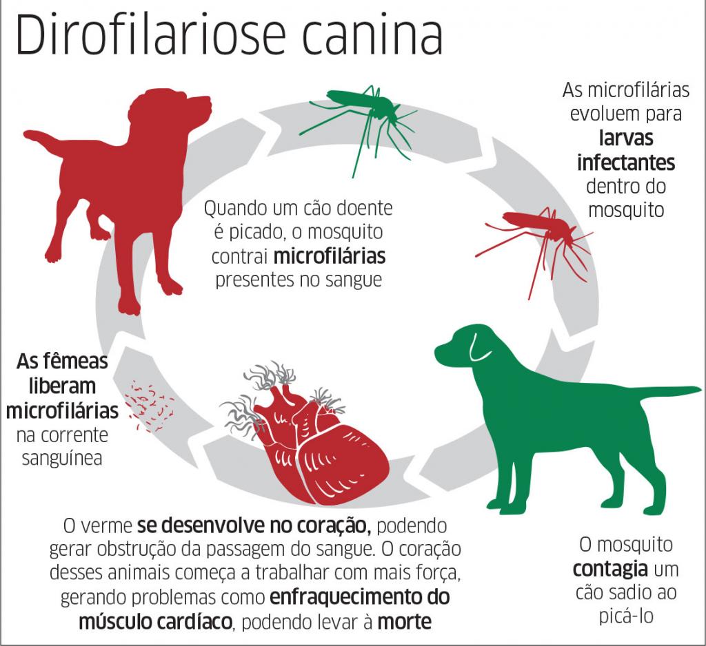Verme do coração em cachorros e gatos - contaminação, diagnóstico e tratamento 1