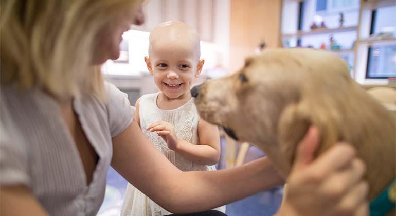 Câncer de próstata em cachorros 1