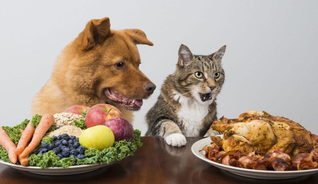 Alimentos PROIBIDOS para cachorros e gatos 1