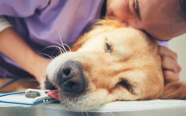 Exames de imagem em cães e gatos em Santo André 2