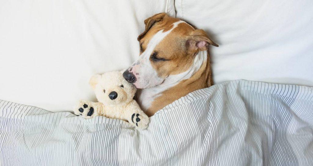 Cachorros sonham? Se sim, com o quê? 2