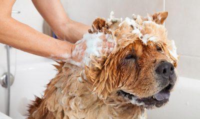 O melhor guia sobre como dar banho no seu cão 16