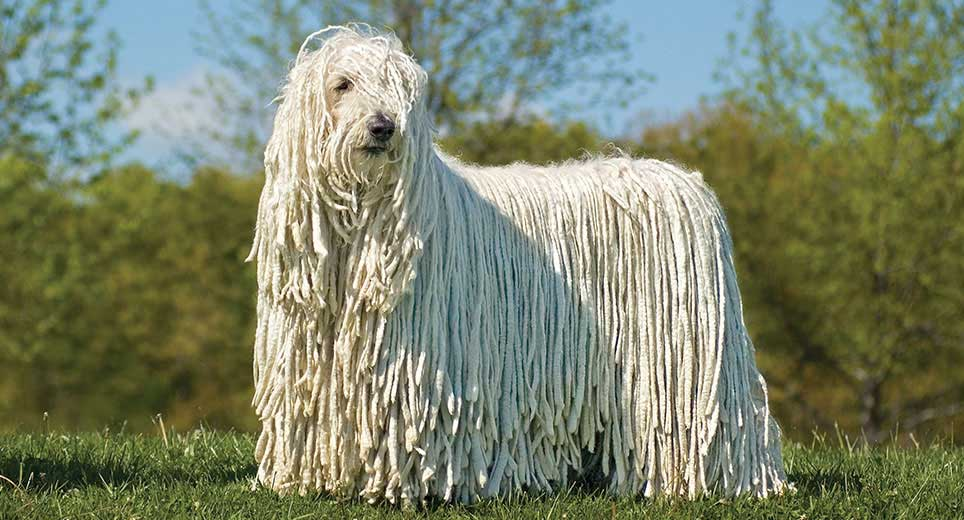Tipos de pelos de cachorro e seus cuidados 24