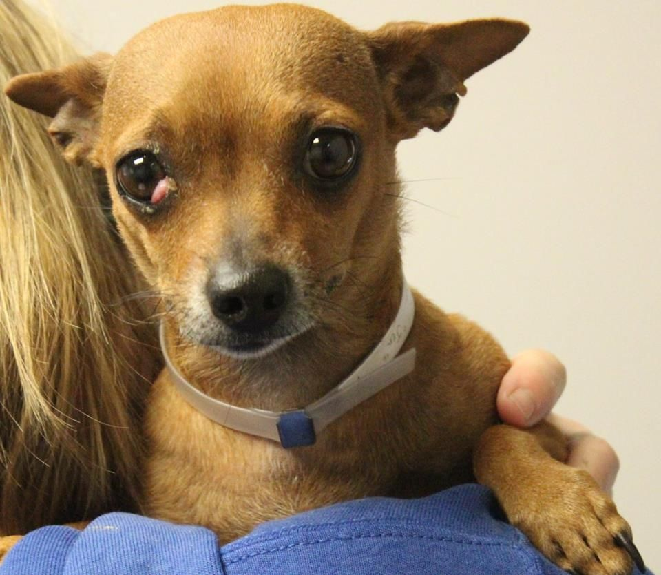 As 10 doenças mais comuns nos olhos caninos: como identificar e o que fazer 3