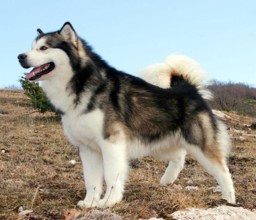 Tipos de pelos de cachorro e seus cuidados 11