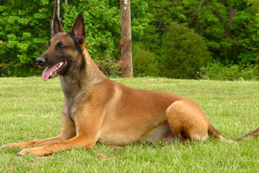 Tipos de pelos de cachorro e seus cuidados 18