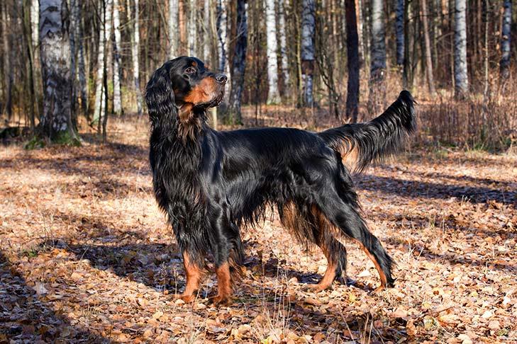 Tipos de pelos de cachorro e seus cuidados 5
