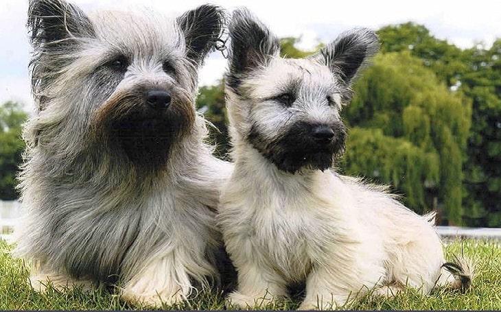 Tipos de pelos de cachorro e seus cuidados 2