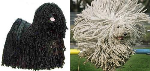 Tipos de pelos de cachorro e seus cuidados 23
