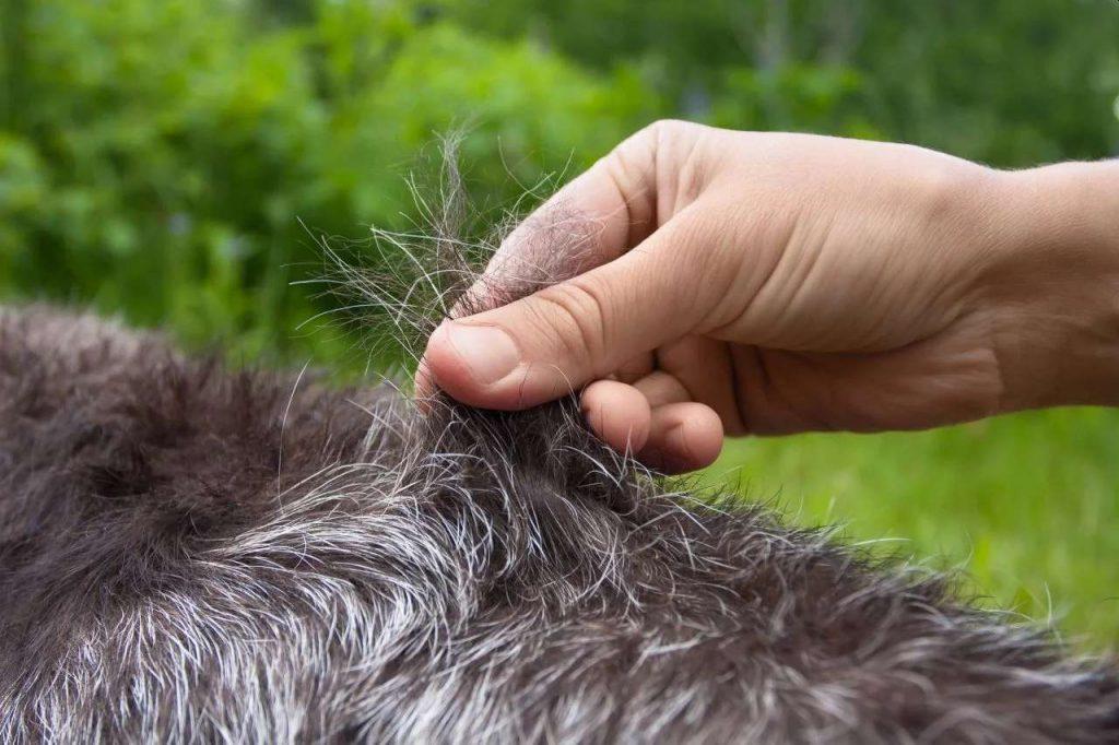 Tipos de pelos de cachorro e seus cuidados 21