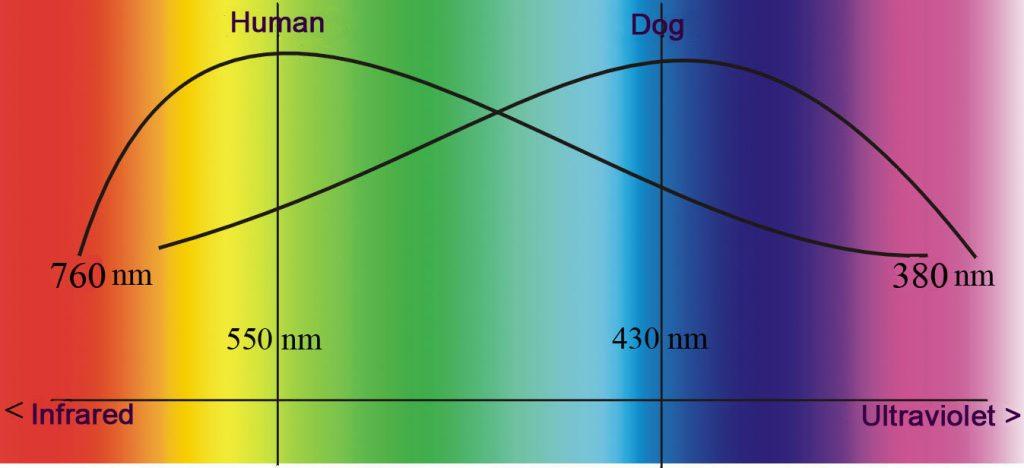 Como os cachorros enxergam? As cores, no escuro, o mundo 2