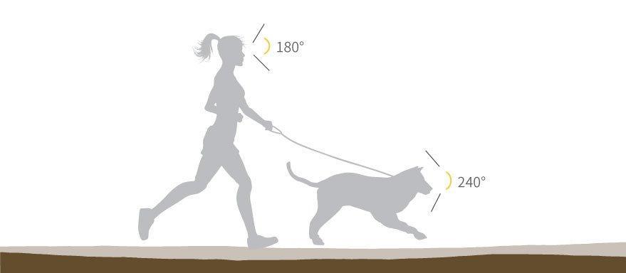 Como os cachorros enxergam? As cores, no escuro, o mundo 6